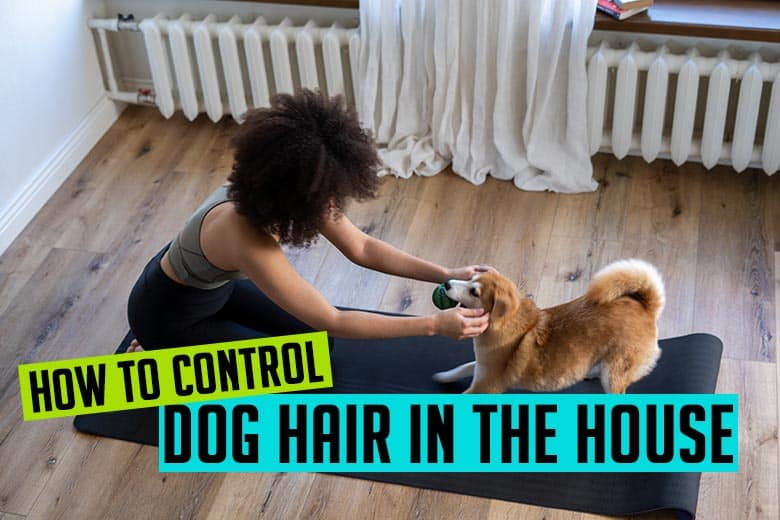 How to control dog hair in the house