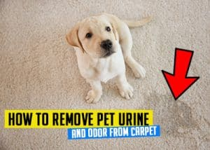How to remove pet urine stains from carpet