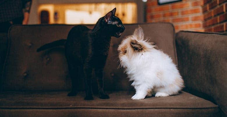 Using vinegar to remove pet odor